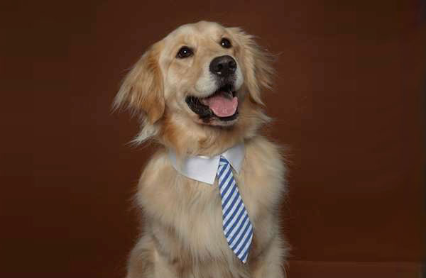 un chien fier avec une cravate