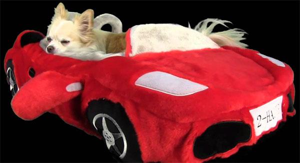 chien posé à la fenêtre de son lit Ferrari rouge