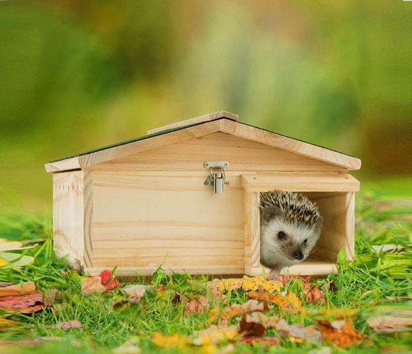 hérisson dans mini maison en bois sur l'herbe