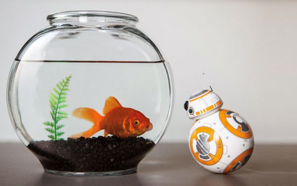 Sphero Star Wars BB-8 face au poisson rouge